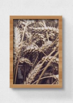 plakat af hvede