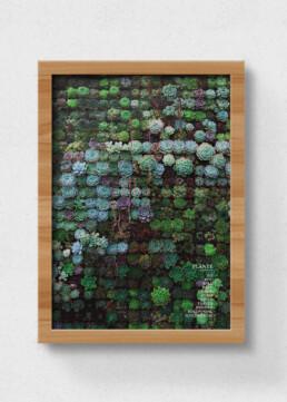 plakat af planter