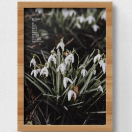 plakat af blomst