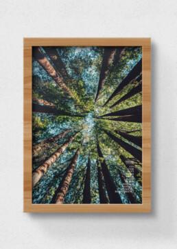 plakat skov