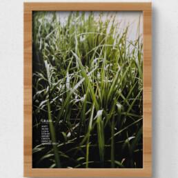 poster grass