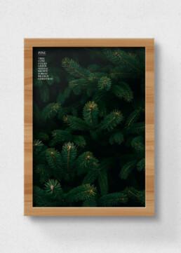 poster pine
