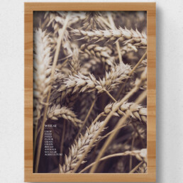 poster wheat