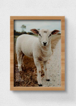poster of sheep