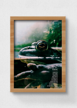 sustainable frog poster
