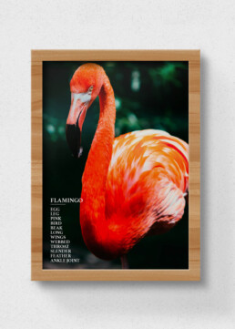 sustainable flamingo poster