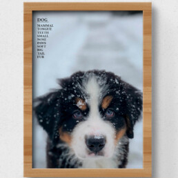 sustainable poster dog
