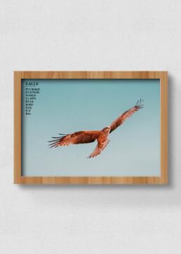 poster og eagle